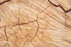 木头年轮纹理广告背景设计模板