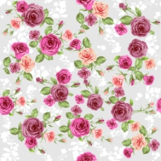 蔷薇花背景