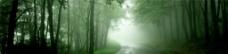 唯美的林间小道背景图