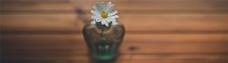 唯美菊花木板底纹图片