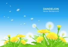 春季唯美蒲公英花朵背景