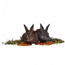 高清唯美兔兔静态素材