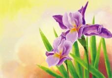 唯美彩铅花卉兰花背景素材