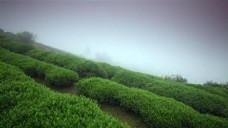 茶山自然风光