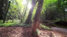 大自然树木生长高清视频拍摄