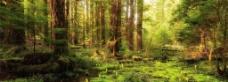 绿色森林背景图