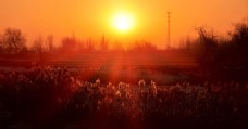 乡间早晨光线处理