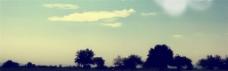 晴空下的树banner背景图