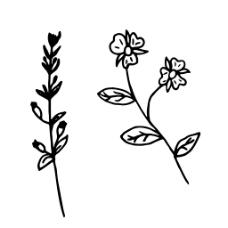 树枝卡通手绘爱心花朵嘴唇透明素材