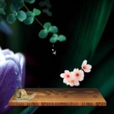 清新植物主图模板免费下载
