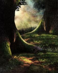 有阳光的树林背景图片1