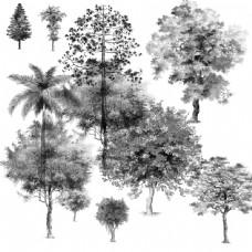 手绘立面树