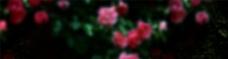 黑色底纹鲜花背景图