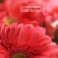 朦胧菊花背景