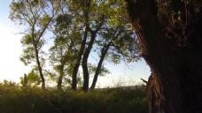 森林阳光高清视频实拍