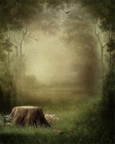 飞鸟仙境树林背景图片