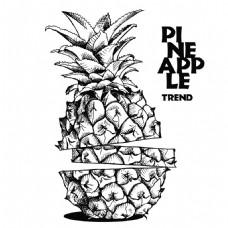 菠萝素描插画图片1