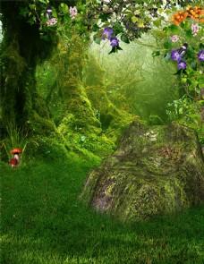 花朵草地树林背景图片