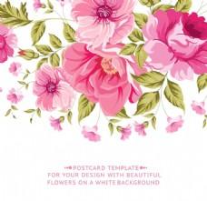 粉色蔷薇花背景