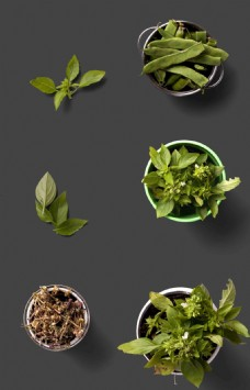 绿色蔬菜盆栽植物