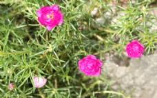 绿野鲜花素材