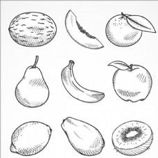 9个手绘素描水果