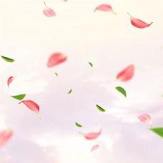 淡粉色飘落的花瓣掉落的树叶