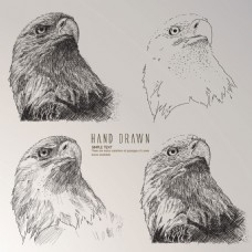 手绘素描风格鹰头插图