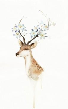 手绘插画唯美小鹿