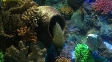 水族馆鱼类高清实拍素材