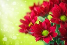 鲜花梦幻背景图片