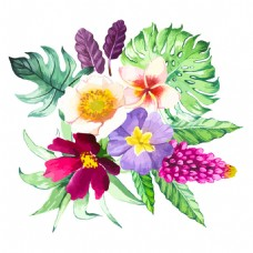 水彩热带植物花朵图案图片