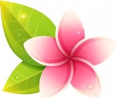 粉色的鸡蛋花