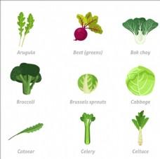 常见蔬菜插图集