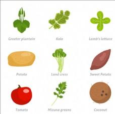 常见健康的蔬菜