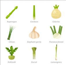 常见蔬菜插图
