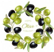 橄榄 橄榄油