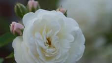 实拍花卉花朵视频素材