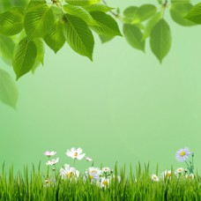 花朵青草树叶绿色背景素材