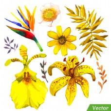 水彩黄花图案图片
