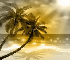 椰子树黄昏背景
