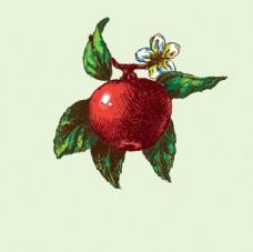 手绘苹果插图