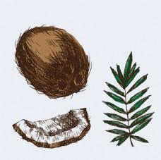 手绘椰子插图