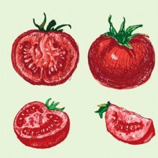 手绘番茄西红柿插图