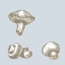 手绘蘑菇插图