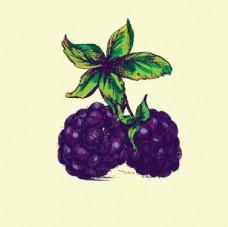手绘树莓黑莓