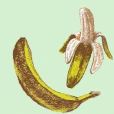 手绘香蕉插图