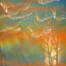 树木与光轨迹图片