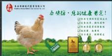 鸡蛋banner