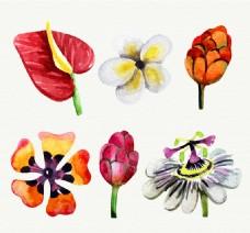 水彩绘花朵矢量